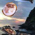 なかきさんの静岡県下田市でのカサゴの釣果写真