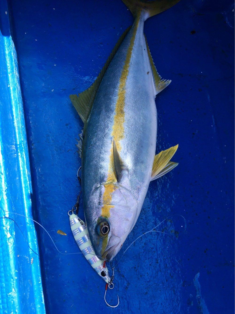 大五郎さんの投稿画像,写っている魚はヒラマサ