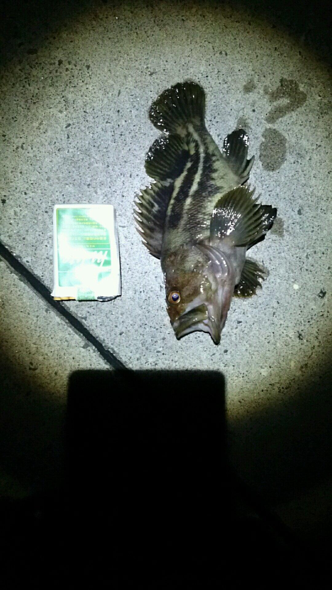ハイラックス野郎さんの投稿画像,写っている魚はシマゾイ