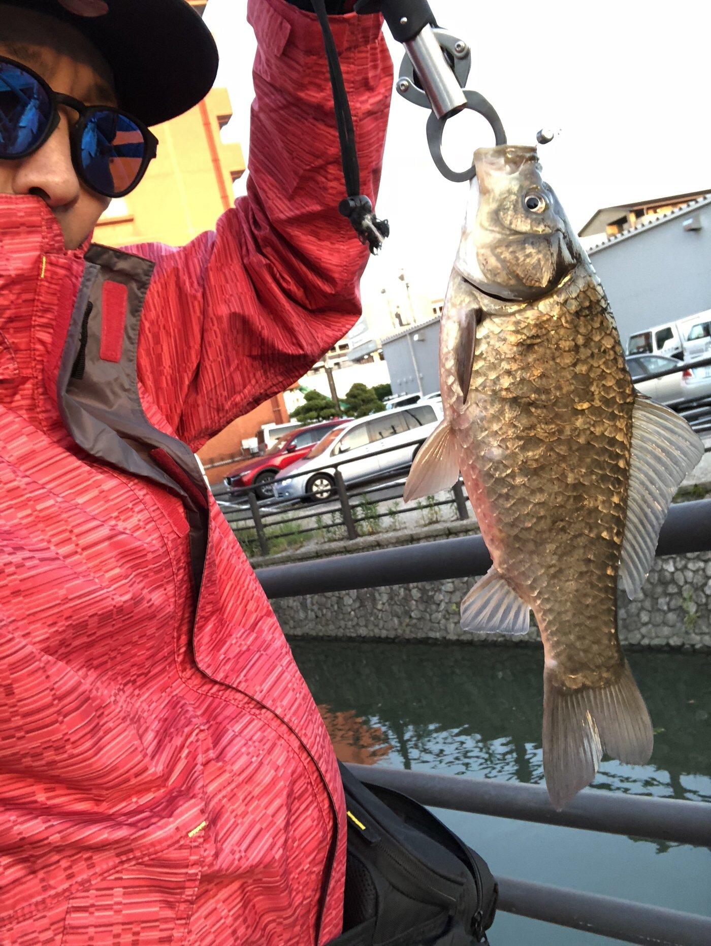 俺時々釣りさんの投稿画像,写っている魚はヘラブナ