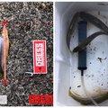ふみおさんの和歌山県伊都郡での釣果写真