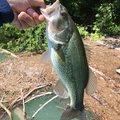 Swanさんの高知県安芸市での釣果写真