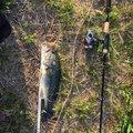 ゆーや(新)さんの和歌山県岩出市での釣果写真