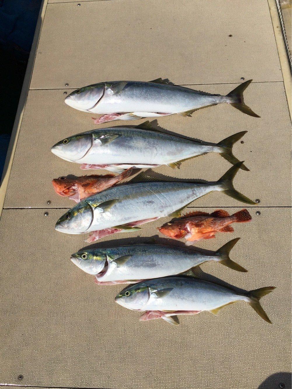 asaさんの投稿画像,写っている魚はヒラマサ