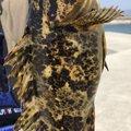 Guchi-yamさんの三重県津市でのタケノコメバルの釣果写真