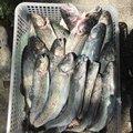 鯊太郎さんの神奈川県足柄下郡での釣果写真