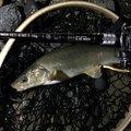 Hirotoさんの北海道阿寒郡での釣果写真