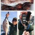 てつさんの長崎県西海市でのマダイの釣果写真