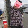 次狼@釣り垢さんの福岡県でのボラの釣果写真