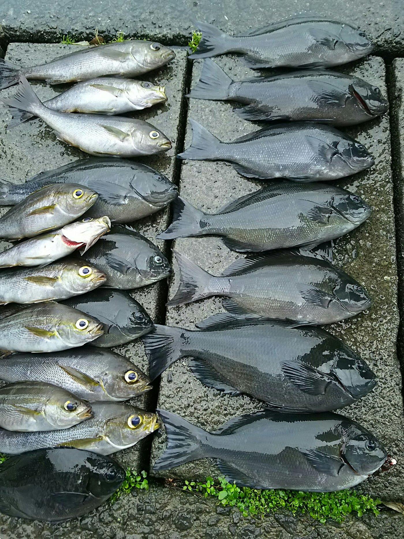 山北さんの投稿画像,写っている魚はメジナ