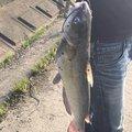 ねいうさんの茨城県稲敷郡での釣果写真