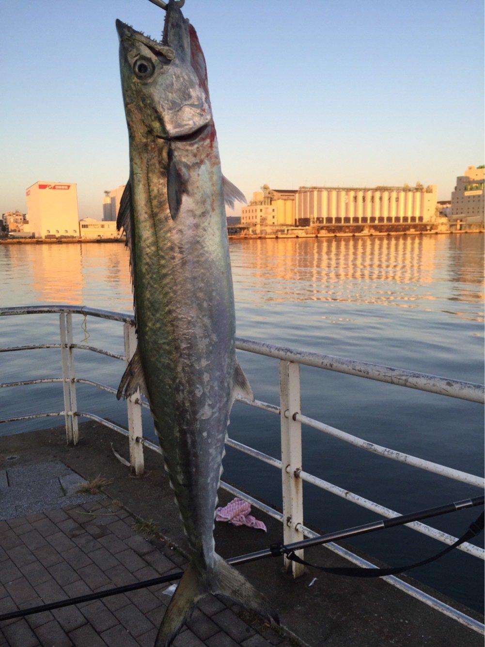 カズワタベさんの投稿画像,写っている魚はサワラ