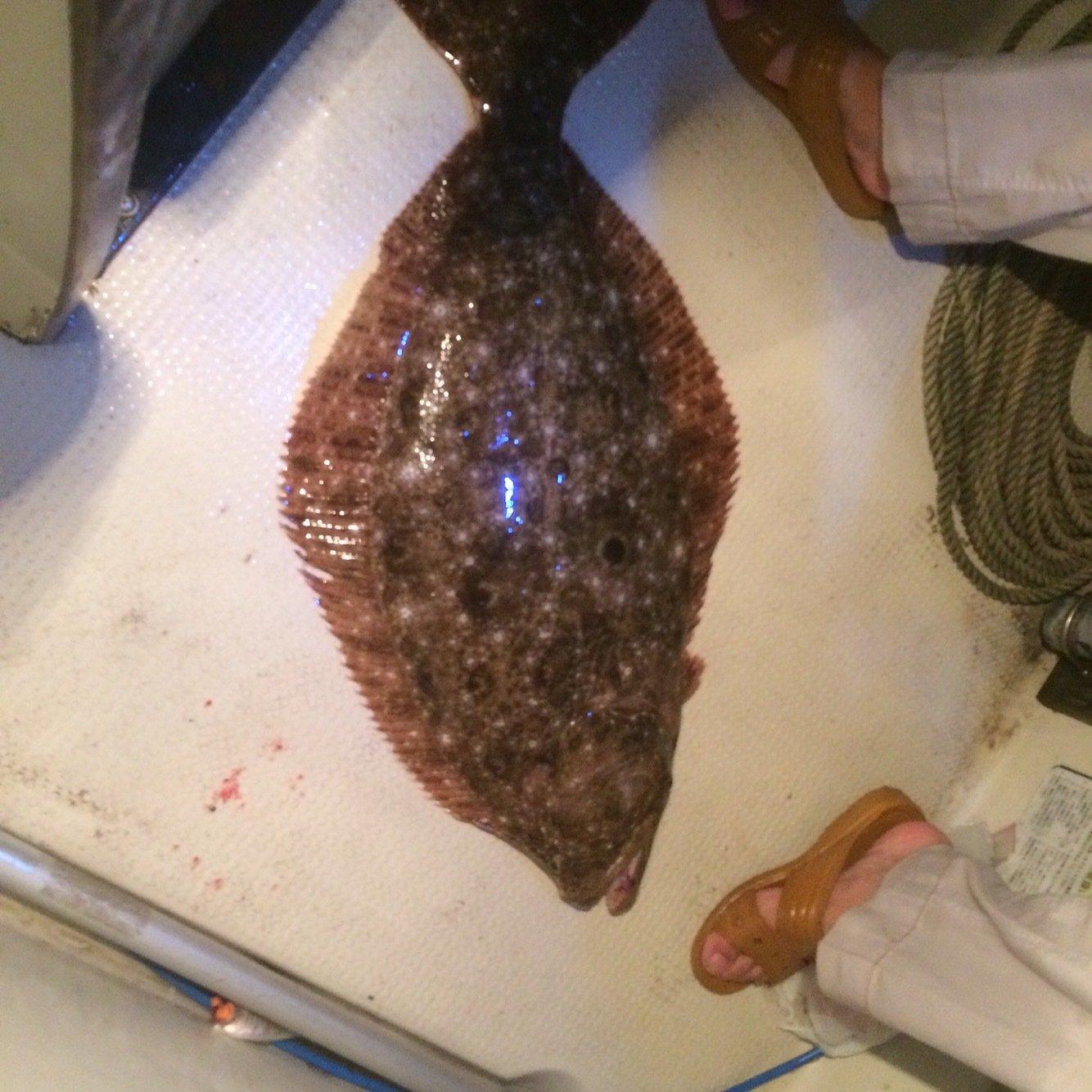 鱸建設さんの投稿画像,写っている魚はヒラメ