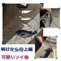 ゆ。さんの新潟県中魚沼郡での釣果写真