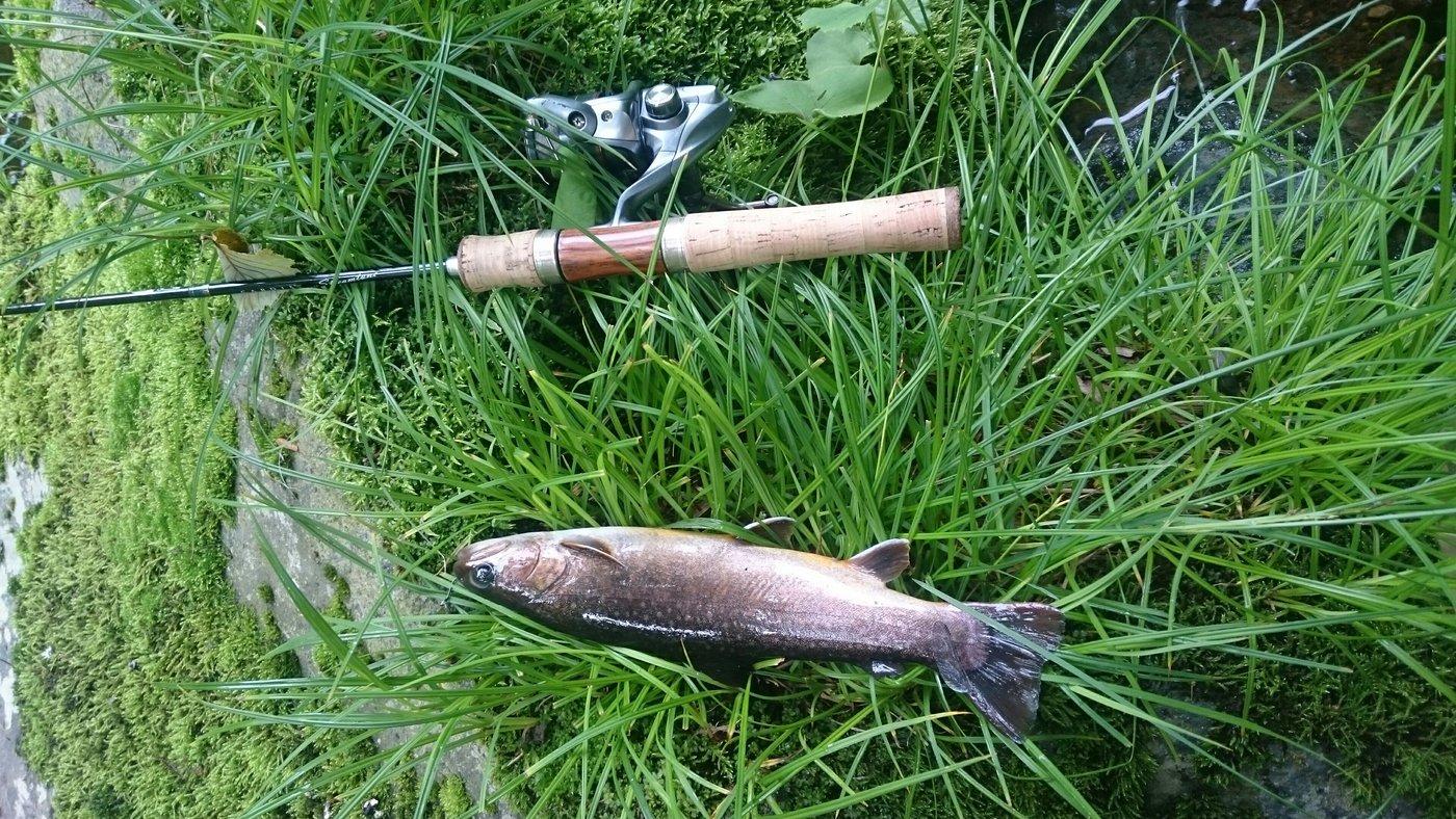いそいそさんの投稿画像,写っている魚はイワナ