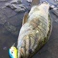 ATさんの茨城県常陸大宮市での釣果写真