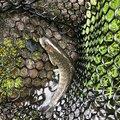 そいやさんの山梨県北杜市での釣果写真
