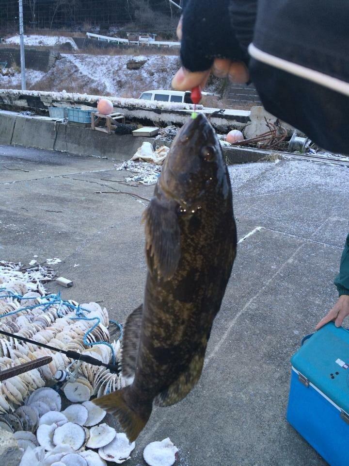 ゆーちん77さんの投稿画像,写っている魚はアイナメ