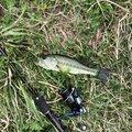 シマさんさんの福島県東白川郡での釣果写真