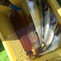 ATさんの茨城県高萩市での釣果写真
