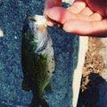 げんきさんの山形県東置賜郡での釣果写真