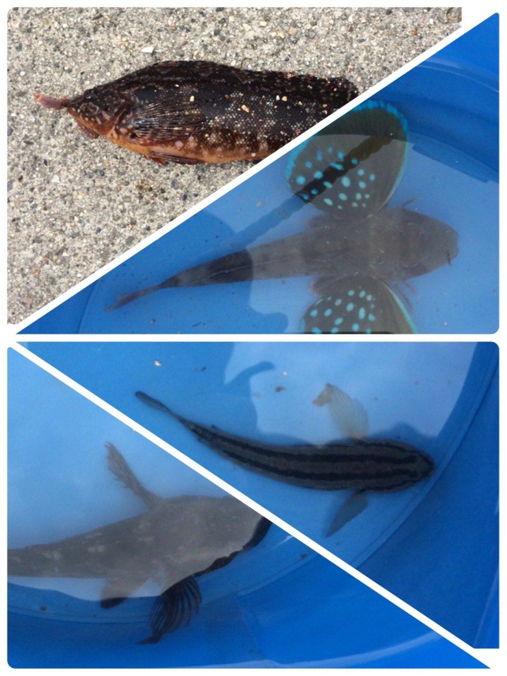 ヤスさんの投稿画像,写っている魚はホウボウ