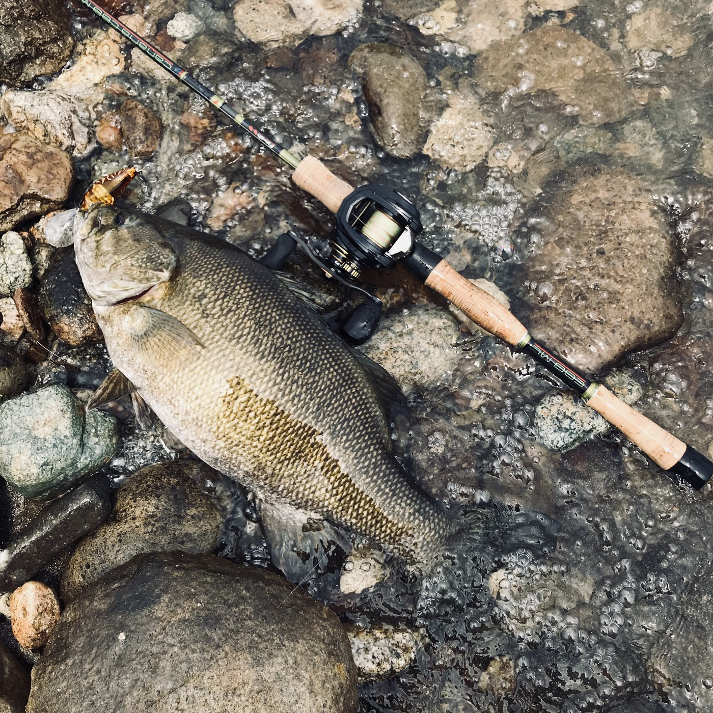 fire mouthさんの投稿画像,写っている魚はスモールマウスバス