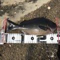 波平さんのクロメジナの釣果写真
