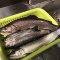 フォルテッシモさんの青森県三戸郡での釣果写真