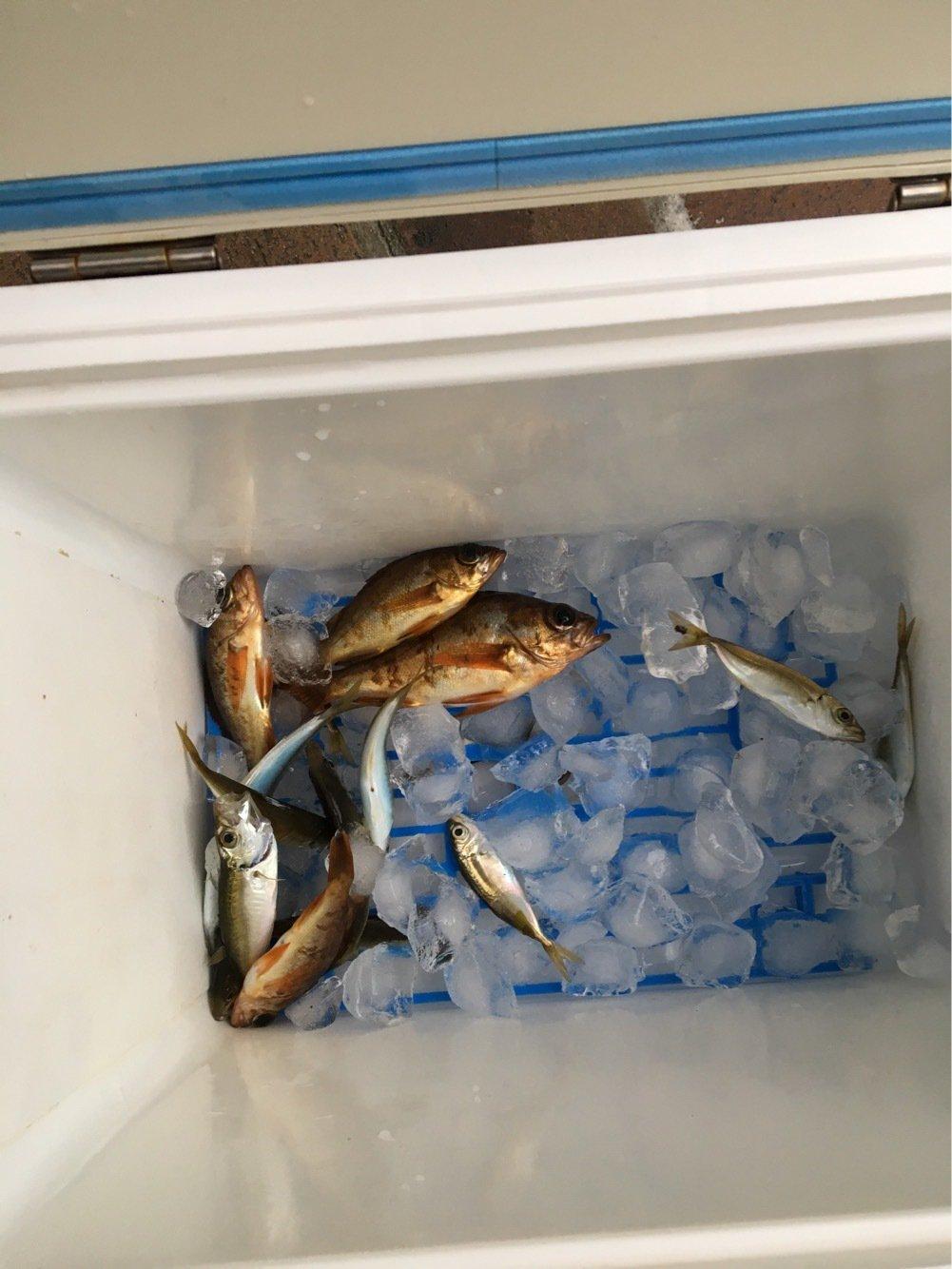 Yuuuuuuukiさんの投稿画像,写っている魚はアジ
