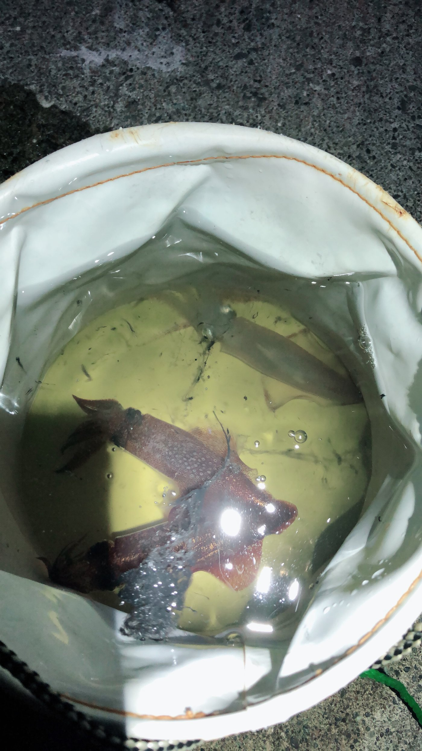釣人21号さんの投稿画像,写っている魚は