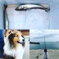Homaさんの千葉県富津市でのシロギスの釣果写真