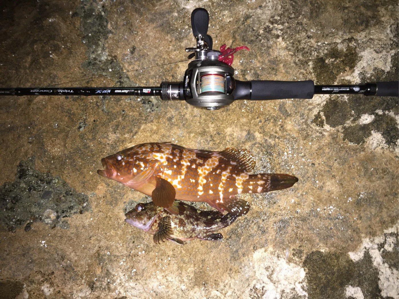 Rock Linkさんの投稿画像,写っている魚はキジハタ