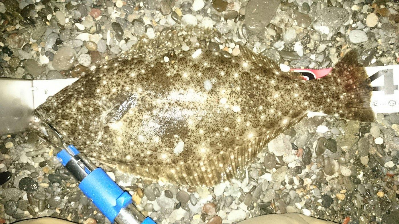 ちゅーだいさんの投稿画像,写っている魚はヒラメ