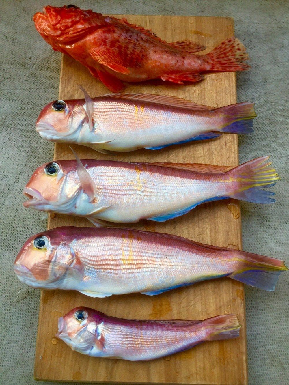ハゼ男さんの投稿画像,写っている魚はアマダイ