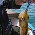 梅宮さんの福岡県福津市でのアオリイカの釣果写真