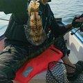 貴くんさんの福岡県福津市でのアオリイカの釣果写真