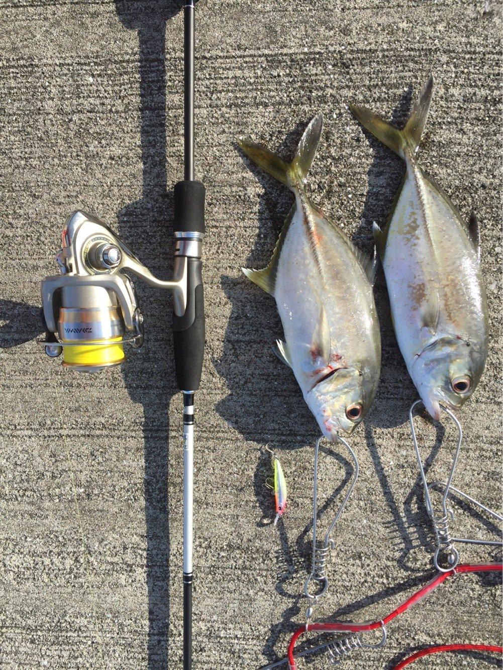 ヨウスケさんの投稿画像,写っている魚は