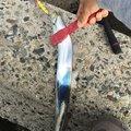new-kozyさんの大阪府泉北郡でのタチウオの釣果写真