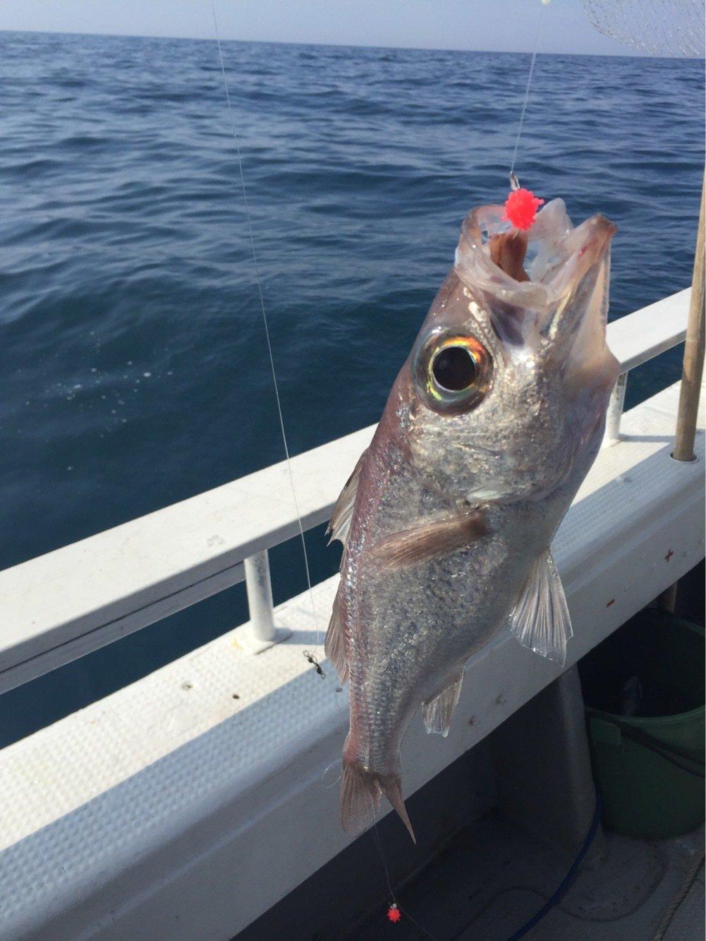 よーちんさんの投稿画像,写っている魚はナガオオメハタ