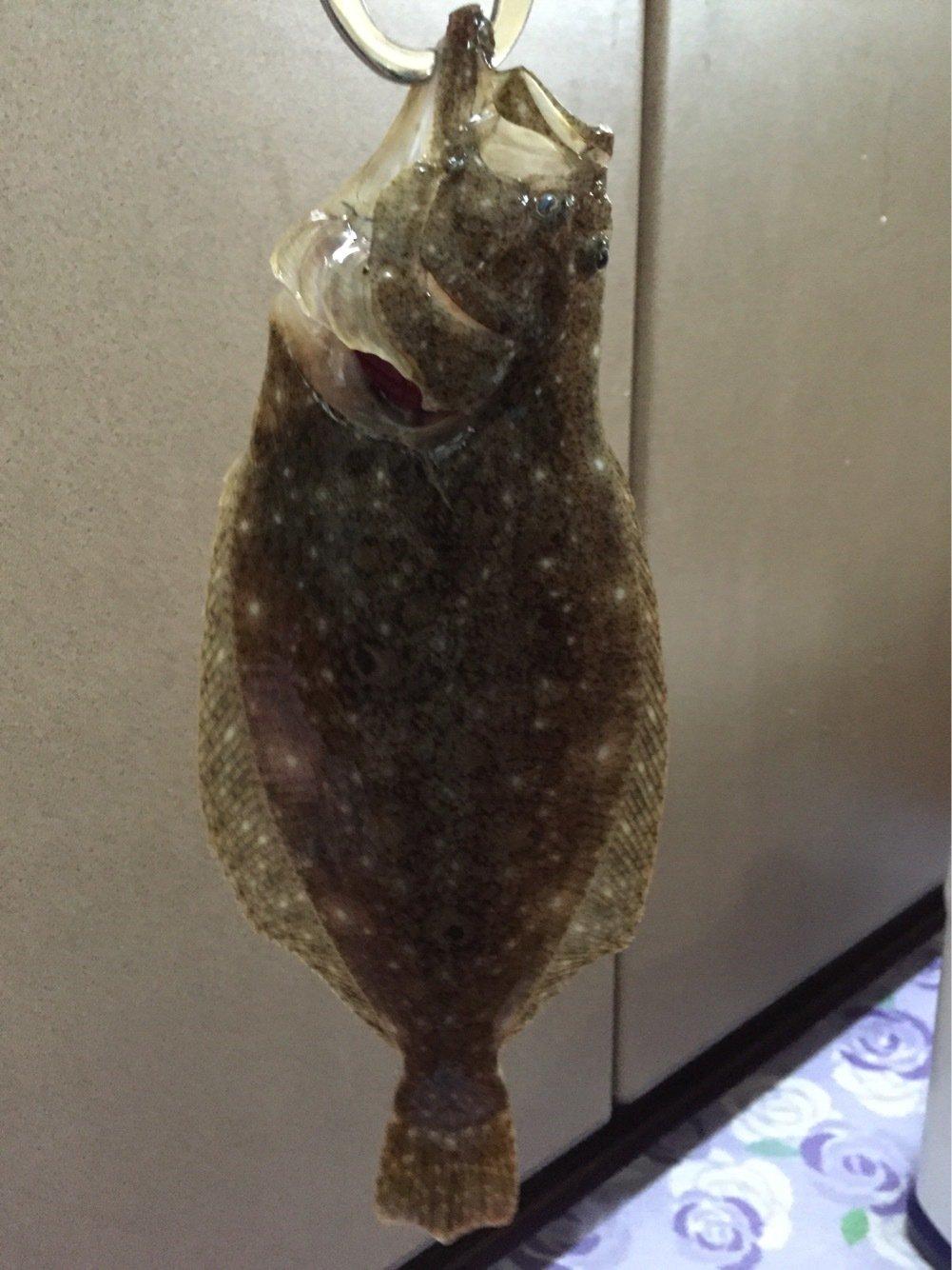 ビビさんの投稿画像,写っている魚はヒラメ