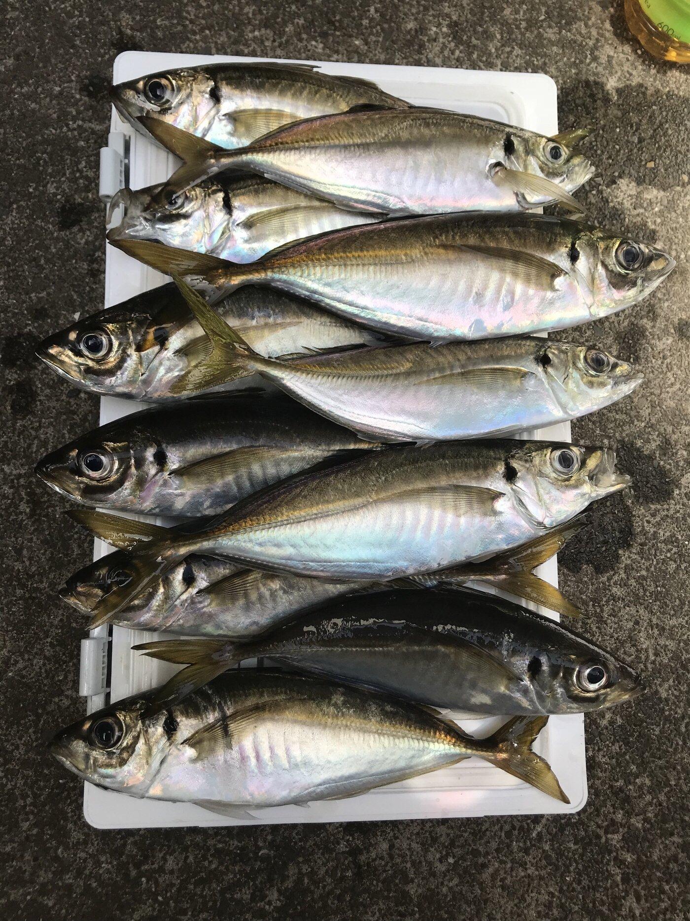 たかえもんさんの投稿画像,写っている魚はアジ,カサゴ