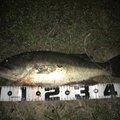 TYさんの佐賀県杵島郡での釣果写真