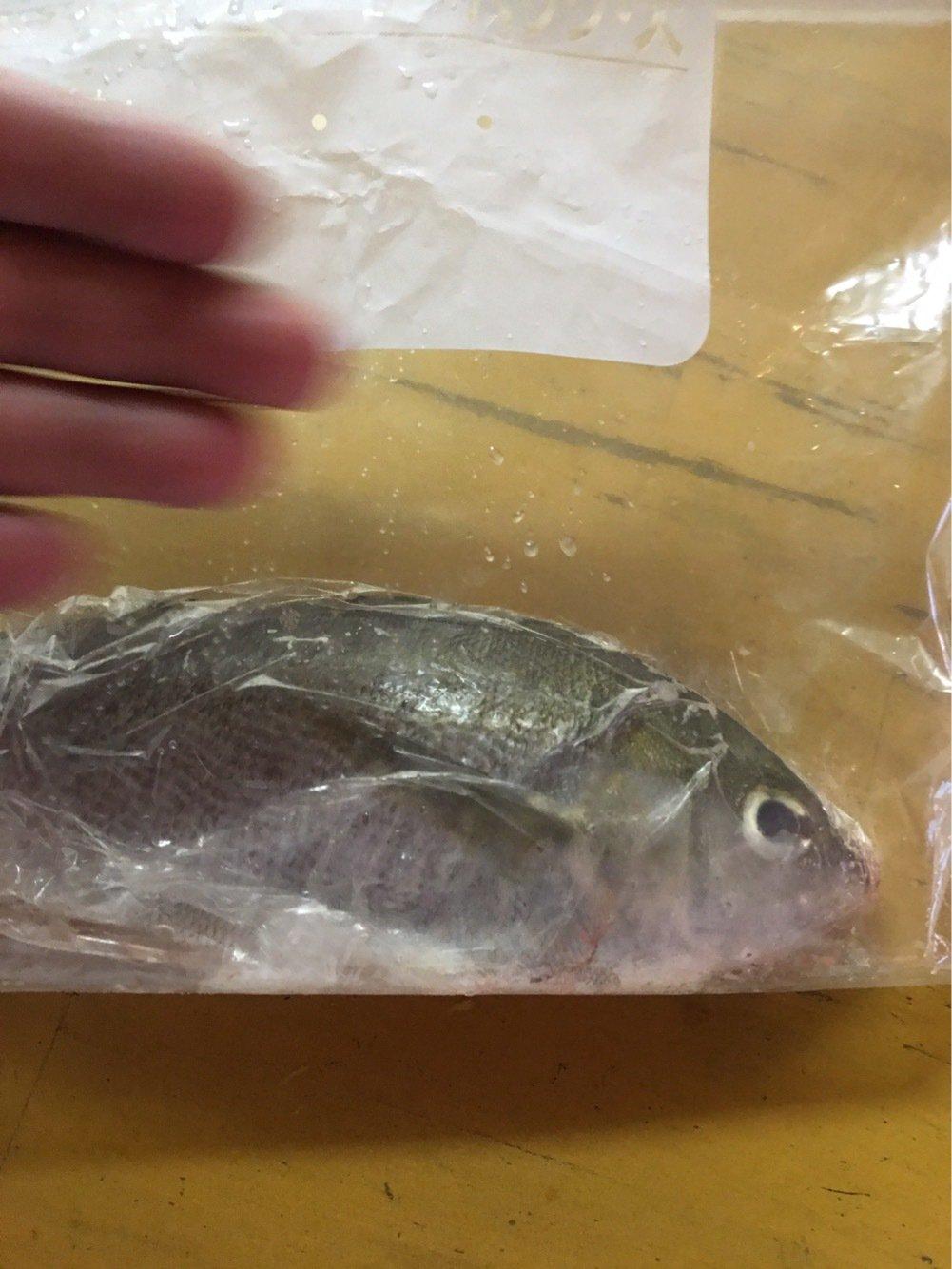 クリリンさんの投稿画像,写っている魚はイサキ