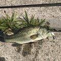 やっさんさんの茨城県行方市での釣果写真