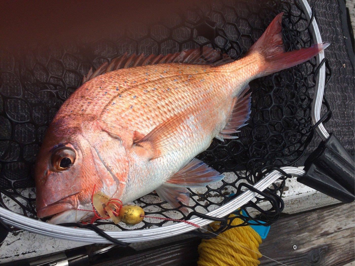 ごぼ天さんの投稿画像,写っている魚は