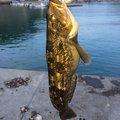 JOH-Zさんの北海道余市郡での釣果写真