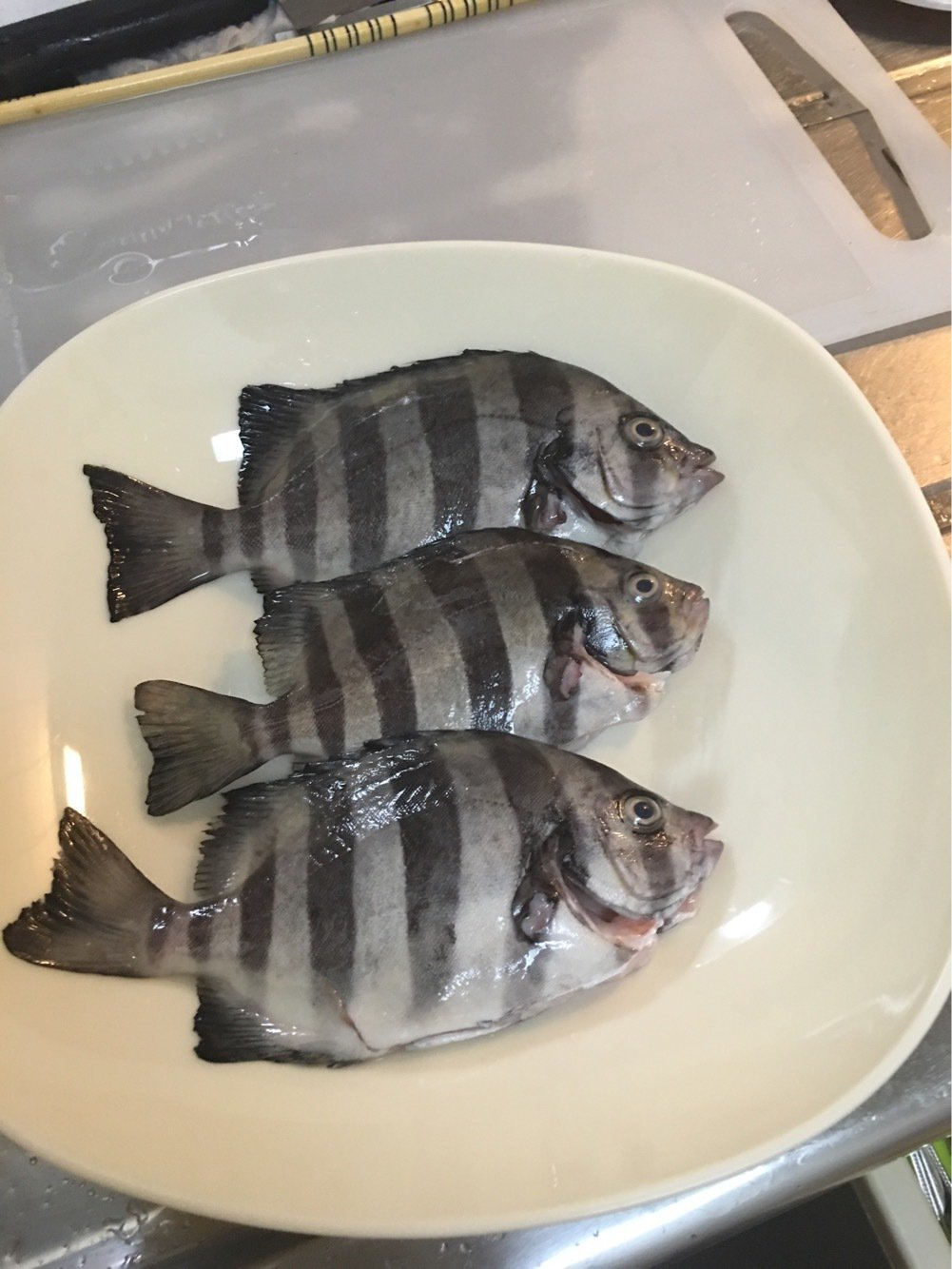 りょさんの投稿画像,写っている魚は