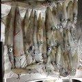 釣人21号さんの北海道岩内郡での釣果写真