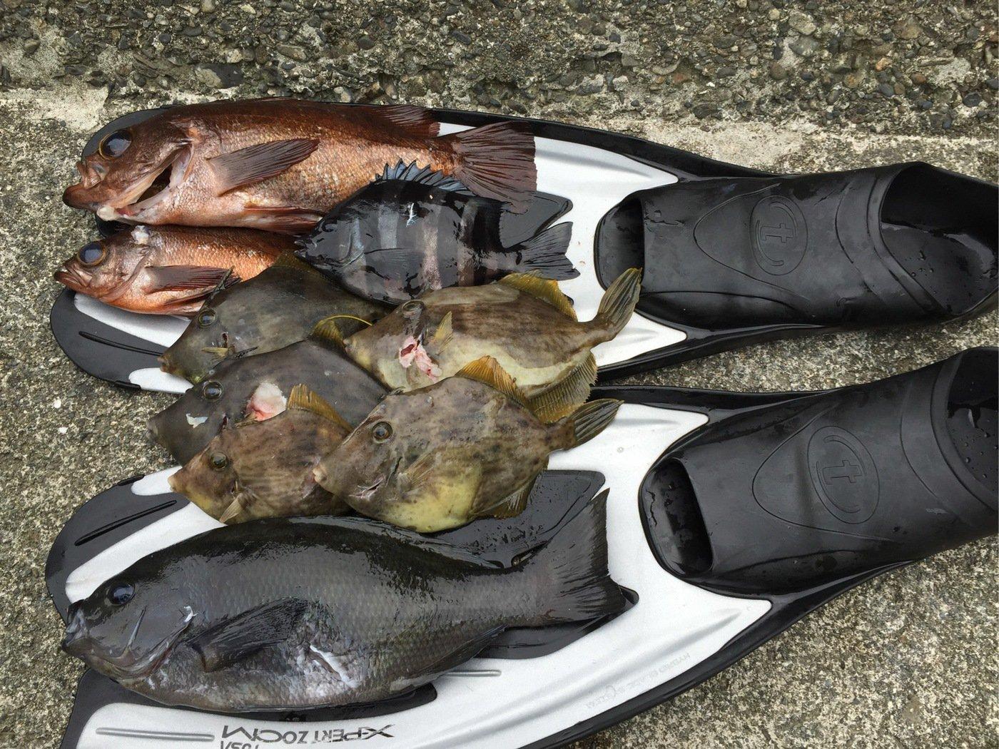 trakさんの投稿画像,写っている魚は